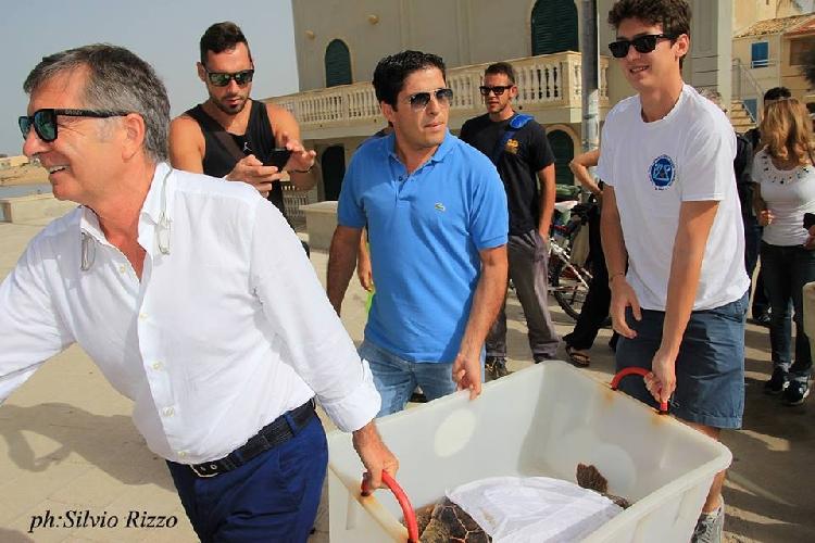 http://www.ragusanews.com//immagini_articoli/22-09-2014/liberata-una-tartaruga-nel-mare-di-montalbano-500.jpg