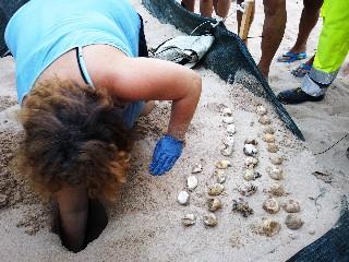 https://www.ragusanews.com//immagini_articoli/22-09-2020/1600770352-conclusa-l-operazione-tartaruga-1-240.jpg