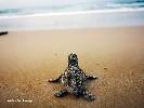 https://www.ragusanews.com//immagini_articoli/22-09-2020/conclusa-l-operazione-tartaruga-100.jpg