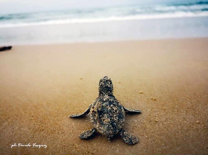 https://www.ragusanews.com//immagini_articoli/22-09-2020/conclusa-l-operazione-tartaruga-500.jpg