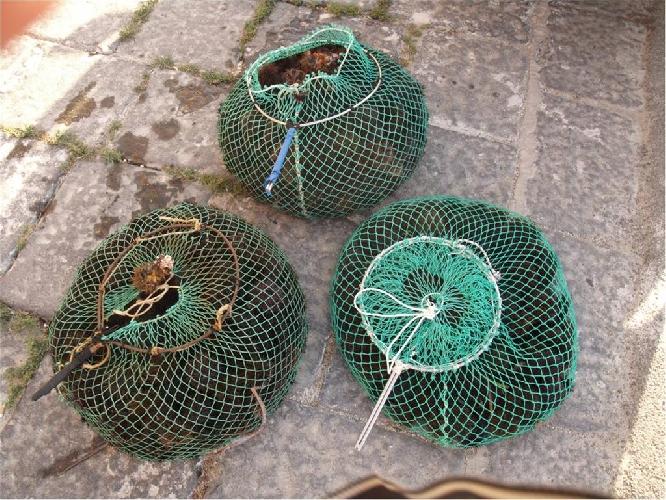 http://www.ragusanews.com//immagini_articoli/22-10-2014/sequestro-di-ricci-di-mare-a-torre-di-mezzo-500.jpg