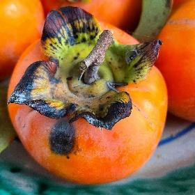 https://www.ragusanews.com//immagini_articoli/22-10-2021/cachi-a-dieta-come-mangiarli-restando-in-linea-proprieta-e-benefici-280.jpg