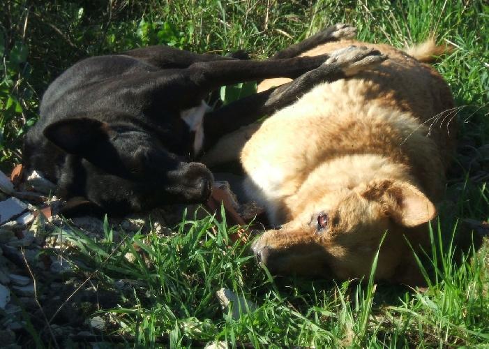 https://www.ragusanews.com//immagini_articoli/22-12-2014/cani-avvelenati-in-contrada-cimilla-500.jpg