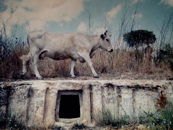 https://www.ragusanews.com//immagini_articoli/22-12-2016/eis-pegas-un-documentario-di-andrea-giannone-420.jpg