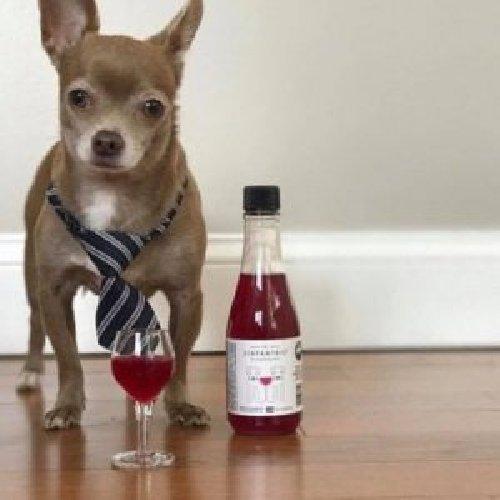 https://www.ragusanews.com//immagini_articoli/23-01-2020/il-vino-per-gani-e-gatti-ci-mancava-a-quando-la-birra-per-cani-e-500.jpg
