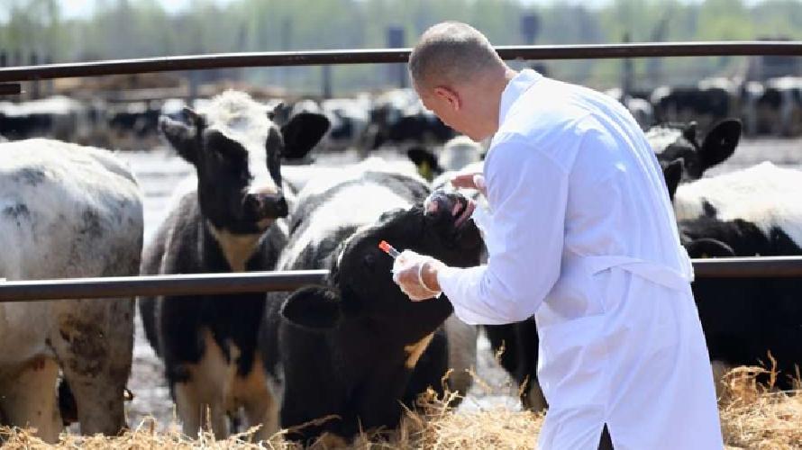 http://www.ragusanews.com//immagini_articoli/23-05-2016/l-asp-di-ragusa-licenzia-un-proprio-veterinario-500.jpg