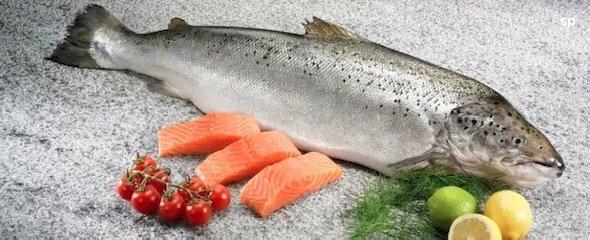 https://www.ragusanews.com//immagini_articoli/23-05-2019/la-corretta-alimentazione-il-colesterolo-240.jpg
