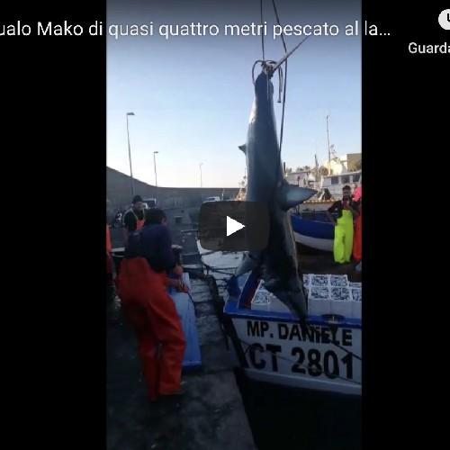 https://www.ragusanews.com//immagini_articoli/23-05-2020/pescato-uno-squalo-nel-porto-di-catania-video-500.jpg