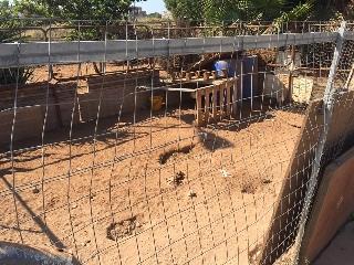 http://www.ragusanews.com//immagini_articoli/23-06-2017/smantellato-recinto-abusivo-messi-sicurezza-cani-240.jpg