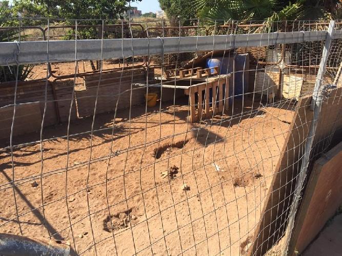 http://www.ragusanews.com//immagini_articoli/23-06-2017/smantellato-recinto-abusivo-messi-sicurezza-cani-500.jpg