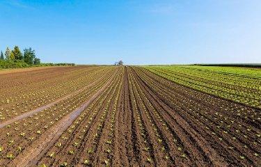 https://www.ragusanews.com//immagini_articoli/23-06-2018/contributi-agricoltura-biologica-3000-aziende-siciliane-240.jpg