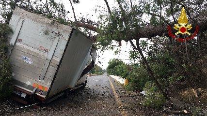 https://www.ragusanews.com//immagini_articoli/23-07-2018/catania-albero-cade-camion-240.jpg