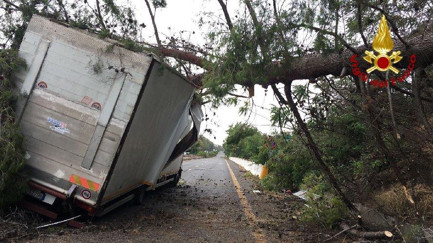 https://www.ragusanews.com//immagini_articoli/23-07-2018/catania-albero-cade-camion-500.jpg