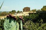 https://www.ragusanews.com//immagini_articoli/23-08-2019/il-giardino-mediterraneo-di-villa-aurea-valle-dei-templi-100.jpg