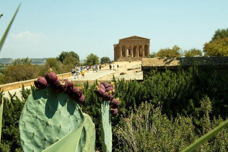 https://www.ragusanews.com//immagini_articoli/23-08-2019/il-giardino-mediterraneo-di-villa-aurea-valle-dei-templi-500.jpg