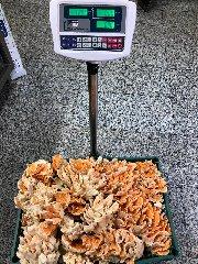 https://www.ragusanews.com//immagini_articoli/23-09-2019/1569257985-trova-un-fungo-di-carrubo-di-13-chili-foto-video-1-240.jpg