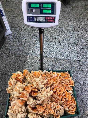 https://www.ragusanews.com//immagini_articoli/23-09-2019/1569257985-trova-un-fungo-di-carrubo-di-13-chili-foto-video-1-500.jpg