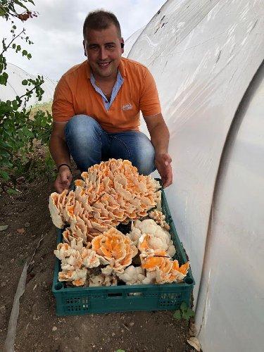 https://www.ragusanews.com//immagini_articoli/23-09-2019/1569257986-trova-un-fungo-di-carrubo-di-13-chili-foto-video-2-500.jpg