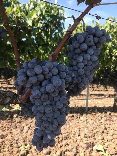 https://www.ragusanews.com//immagini_articoli/23-09-2020/1600857016-vinietna-un-oro-e-due-argenti-per-i-vini-al-cantara-al-decanter-wine-1-500.jpg