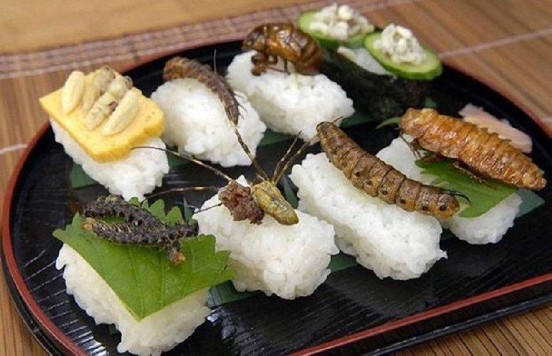 https://www.ragusanews.com//immagini_articoli/23-10-2017/insetti-cibo-sulle-tavole-italiani-500.jpg