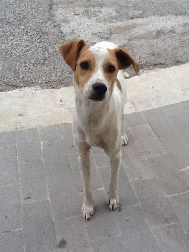 https://www.ragusanews.com//immagini_articoli/23-12-2015/i-cuccioli-randagi-di-donnalucata-un-appello-per-natale-500.jpg