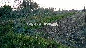 http://www.ragusanews.com//immagini_articoli/23-12-2017/chiaramonte-recinzioni-rotte-colture-distrutte-pascolo-abusivo-foto-100.jpg