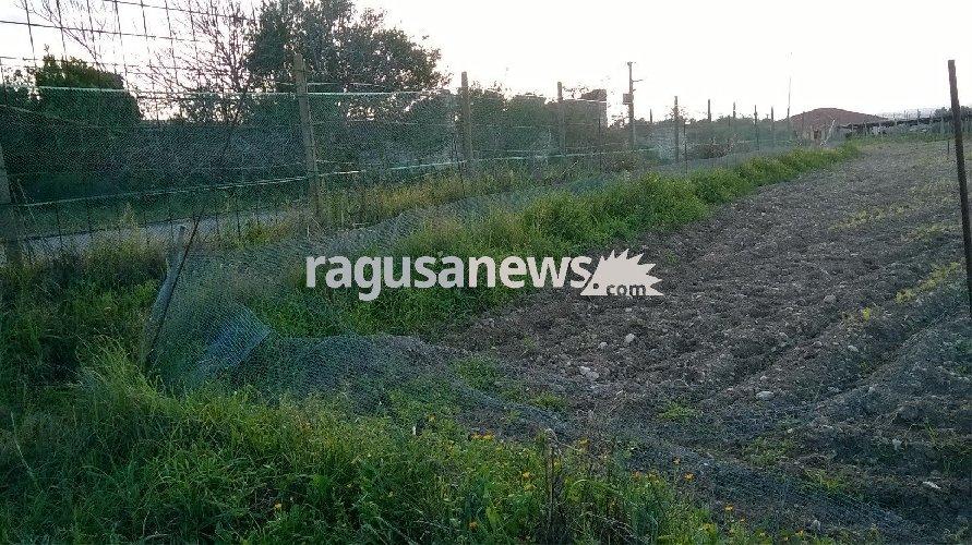 http://www.ragusanews.com//immagini_articoli/23-12-2017/chiaramonte-recinzioni-rotte-colture-distrutte-pascolo-abusivo-foto-500.jpg