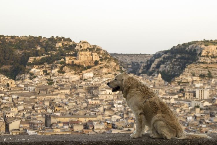 http://www.ragusanews.com//immagini_articoli/24-01-2015/cineturismo-dopo-montalbano-viaggiatori-sulle-orme-del-cane-italo-500.jpg