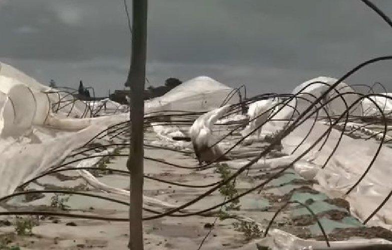 https://www.ragusanews.com//immagini_articoli/24-02-2019/vento-balcani-agricoltura-ginocchio-dichiarata-calamita-500.jpg