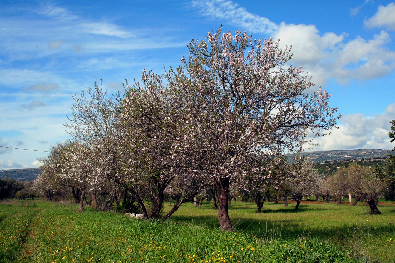 https://www.ragusanews.com//immagini_articoli/24-03-2015/1427217486-3-scicli-vendesi-casa-rurale.jpg