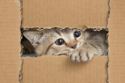 https://www.ragusanews.com//immagini_articoli/24-06-2021/gattino-disidratato-soccorso-dal-servizio-d-ordine-del-g20-280.jpg