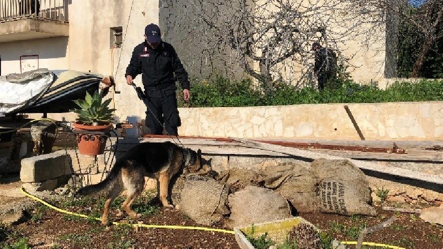 https://www.ragusanews.com//immagini_articoli/24-07-2020/condannati-i-ladri-delle-campagne-iblee-500.jpg