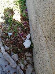 https://www.ragusanews.com//immagini_articoli/24-08-2019/l-incubo-siringhe-aiuola-a-marina-di-modica-240.jpg