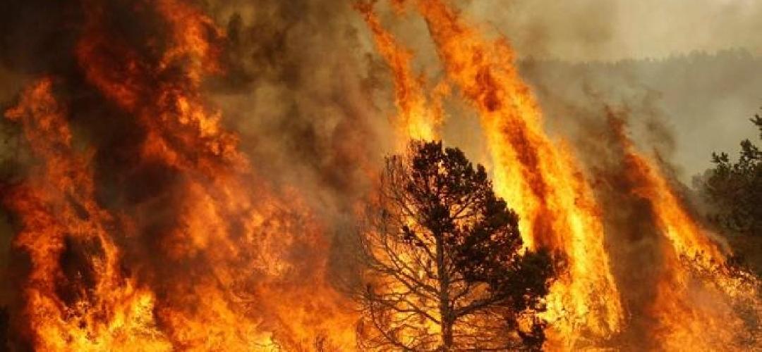 https://www.ragusanews.com//immagini_articoli/24-09-2017/quellincendio-contrada-buttino-ragusa-500.jpg