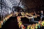 http://www.ragusanews.com//immagini_articoli/24-10-2015/cogli-a-venezia-i-fiori-di-vasconcelos-100.jpg