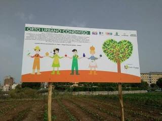 http://www.ragusanews.com//immagini_articoli/24-11-2017/modica-lorto-sociale-diventa-giardino-240.jpg