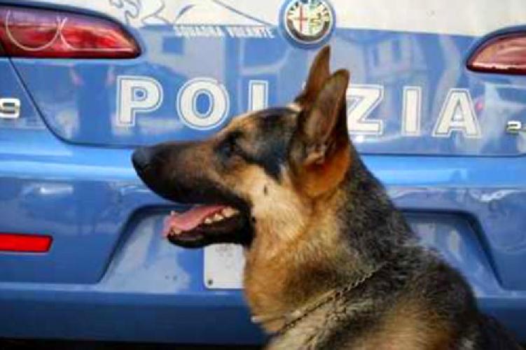 http://www.ragusanews.com//immagini_articoli/25-03-2016/il-rex-della-polizia-trova-droga-nei-centri-accoglienza-migranti-500.jpg