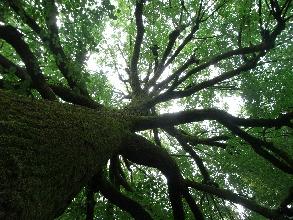 http://www.ragusanews.com//immagini_articoli/25-03-2017/comiso-arrampica-albero-tenta-gettarsi-salvata-220.jpg