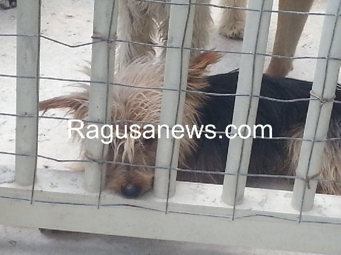 https://www.ragusanews.com//immagini_articoli/25-04-2014/e-morto-lucenti-restano-i-suoi-70-cani-500.jpg