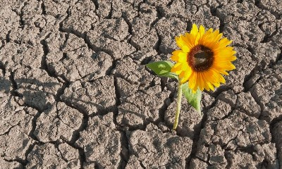 https://www.ragusanews.com//immagini_articoli/25-05-2020/fase-2-la-resilienza-non-basta-240.jpg