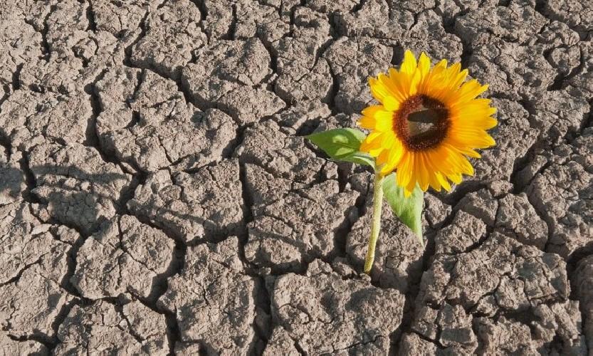 https://www.ragusanews.com//immagini_articoli/25-05-2020/fase-2-la-resilienza-non-basta-500.jpg