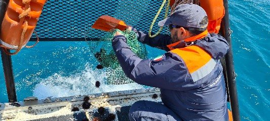 https://www.ragusanews.com//immagini_articoli/25-05-2020/pesca-illegale-di-ricci-di-mare-multa-da-2-mila-euro-a-punta-secca-240.jpg