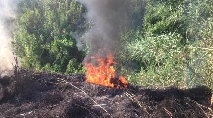 https://www.ragusanews.com//immagini_articoli/25-05-2020/vasto-incendio-a-quartarella-240.jpg