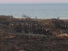 http://www.ragusanews.com//immagini_articoli/25-06-2017/cosa-resta-dopo-lincendio-costa-carro-100.jpg