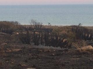 http://www.ragusanews.com//immagini_articoli/25-06-2017/cosa-resta-dopo-lincendio-costa-carro-240.jpg