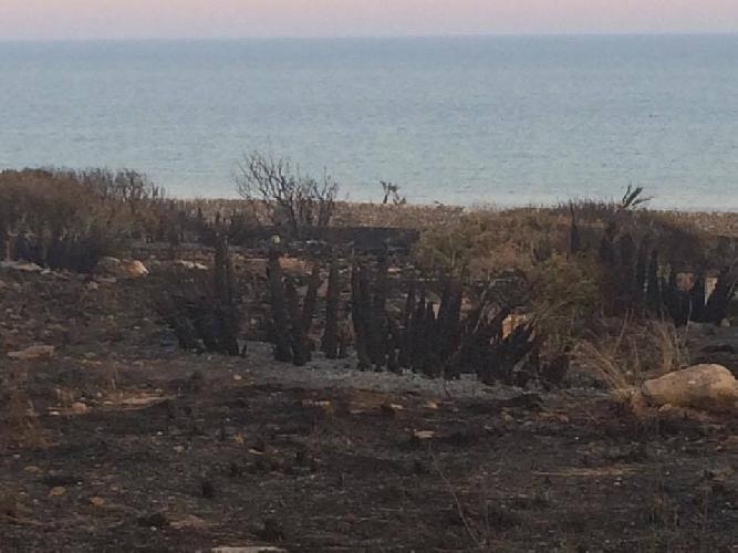 http://www.ragusanews.com//immagini_articoli/25-06-2017/cosa-resta-dopo-lincendio-costa-carro-500.jpg