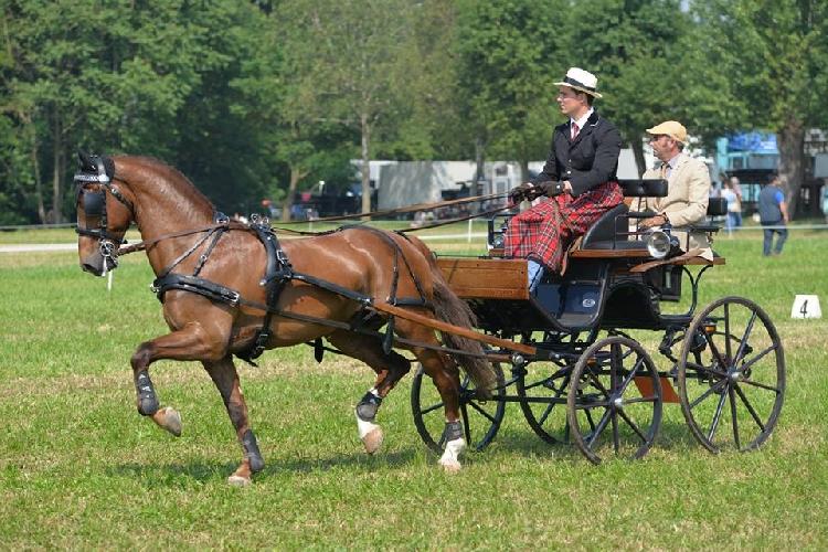 https://www.ragusanews.com//immagini_articoli/25-08-2015/san-giovanni-a-cavallo-500.jpg