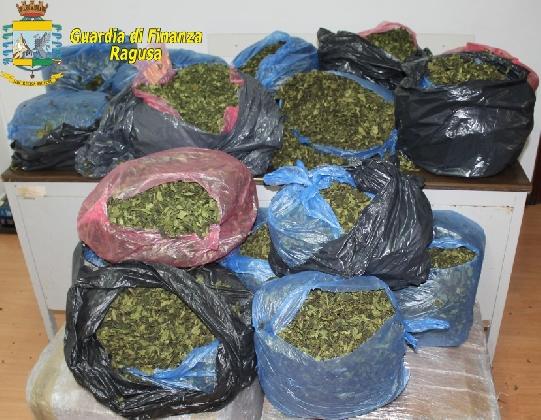https://www.ragusanews.com//immagini_articoli/25-08-2016/pozzallo-sequestrati-36-kg-di-khat-la-droga-dei-poveri-420.jpg