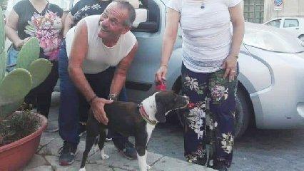 https://www.ragusanews.com//immagini_articoli/26-01-2020/scicli-un-cane-avvelenato-e-ucciso-un-trafitto-cun-una-freccia-240.jpg