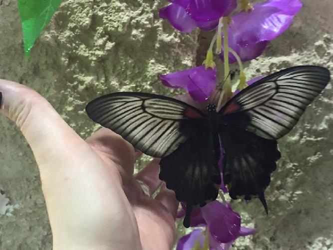 http://www.ragusanews.com//immagini_articoli/26-03-2016/aperture-straordinarie-pasqua-e-pasquetta-casa-delle-farfalle-500.jpg